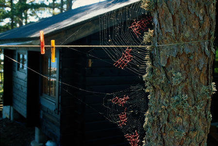 Nina Katchadourian the Mended-Spiderweb series -19, Laundry-, 1998.