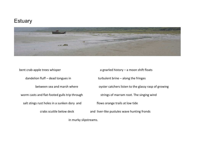 Ann Matthews Estuary